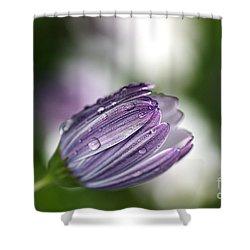 African Daisy Shower Curtain by Joy Watson