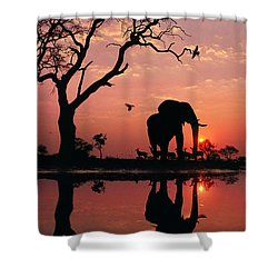 African Elephant At Dawn Shower Curtain by Frans Lanting MINT Images