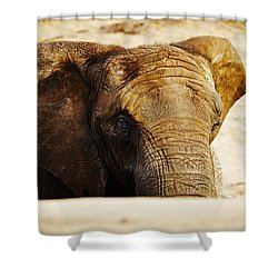 African Elephant Behind A Hill Shower Curtain