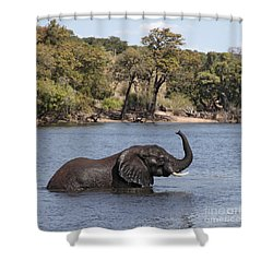 Shower Curtain featuring the photograph African Elephant In Chobe River  by Liz Leyden