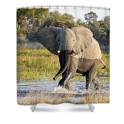Shower Curtain featuring the photograph African Elephant Mock-charging by Liz Leyden