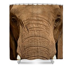 Shower Curtain featuring the photograph African Elephant by Nadalyn Larsen