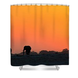 Shower Curtain featuring the photograph African Elephant Sunset by Amanda Stadther
