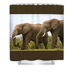 African Elephants Shower Curtain by Menachem Ganon