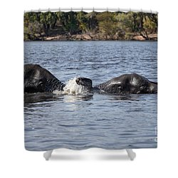 Shower Curtain featuring the photograph African Elephants Swimming In The Chobe River Botswana by Liz Leyden