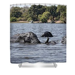 Shower Curtain featuring the photograph African Elephants Swimming In The Chobe River by Liz Leyden