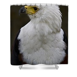 African Fish Eagle 4 Shower Curtain by Heiko Koehrer-Wagner