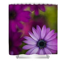 African Gerbera Standout Shower Curtain