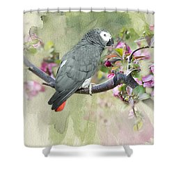 African Gray Among The Blossoms Shower Curtain