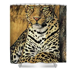 African Leopard Portrait Wildlife Rescue Shower Curtain by Dave Welling
