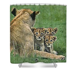 Shower Curtain featuring the photograph African Lion Cubs Study The Photographer Tanzania by Dave Welling