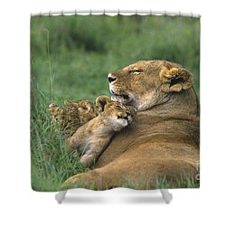 African Lions Mother And Cubs Tanzania Shower Curtain by Dave Welling