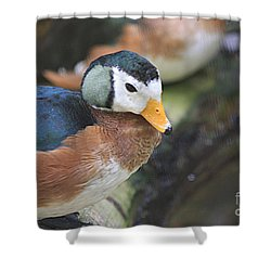 African Pygmy Goose Shower Curtain