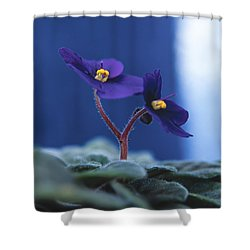 African Violet Shower Curtain by Lana Enderle