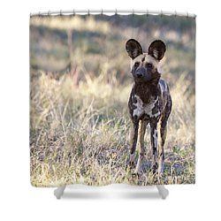 African Wild Dog  Lycaon Pictus Shower Curtain by Liz Leyden