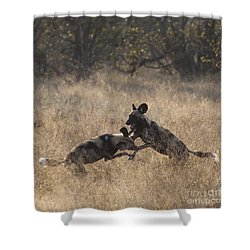 Shower Curtain featuring the photograph African Wild Dogs Play-fighting by Liz Leyden