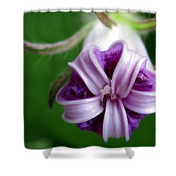 After Morning Glory Shower Curtain