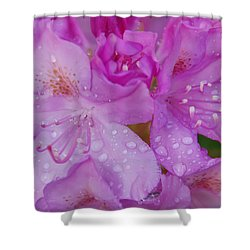 Shower Curtain featuring the photograph After The Rain by Aimee L Maher Photography and Art Visit ALMGallerydotcom