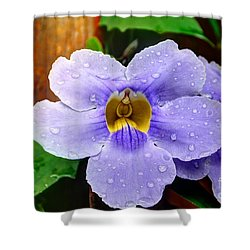 After The Rain Shower Curtain by Bob Hislop