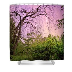 Shower Curtain featuring the photograph After The Rain by Jim Whalen