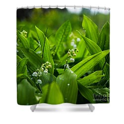 Shower Curtain featuring the photograph After The Rain by Kennerth and Birgitta Kullman