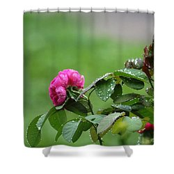 After The Rain Shower Curtain by Stacy C Bottoms