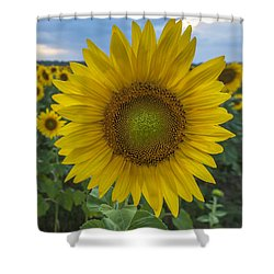 After The Rain Sunflower Augusta Nj Shower Curtain