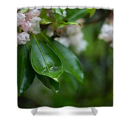 Shower Curtain featuring the photograph After The Storm by Patrice Zinck