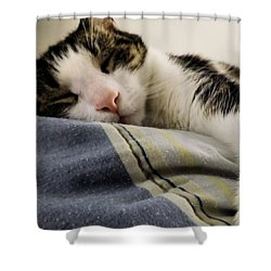 Shower Curtain featuring the photograph Afternoon Nap by Robyn King