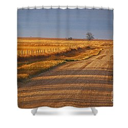 Afternoon Shadows Shower Curtain by Mary Carol Story