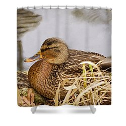 Shower Curtain featuring the photograph Afternoon Siesta by Jordan Blackstone