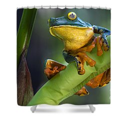 Agalychnis Calcarifer 4 Shower Curtain