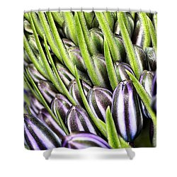 Agapanthus Buds Shower Curtain by Joy Watson
