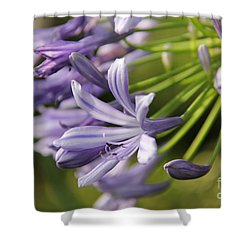 Agapanthus Flower Close-up Shower Curtain