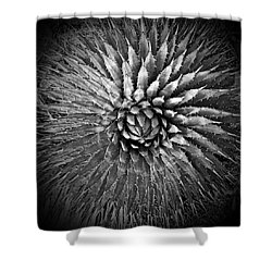 Agave Spikes Black And White Shower Curtain