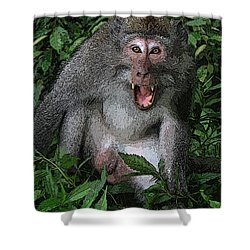 Aggressive Monkey From Bali Shower Curtain by Sergey Lukashin