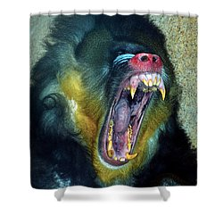 Agressive Mandrill Shower Curtain by Thomas Woolworth