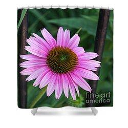 Shower Curtain featuring the photograph Ahh Summer Flowers by Arlene Carmel