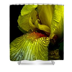 Aieris Shower Curtain