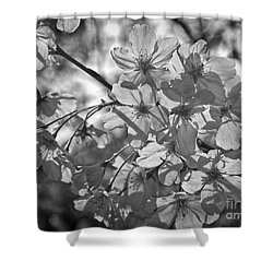 Shower Curtain featuring the photograph Akebono In Monochrome by Peggy Hughes