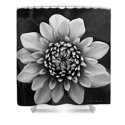 Ala Mode Dahlia In Black And White Shower Curtain