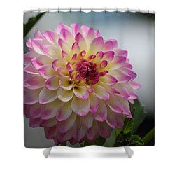Shower Curtain featuring the photograph Ala Mode by Jeanette C Landstrom