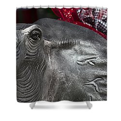Alabama Crimson Tide Football Mascot Shower Curtain by Kathy Clark
