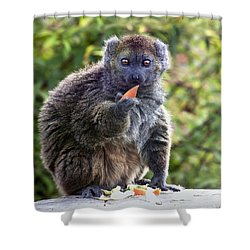 Alaotran Gentle Lemur Shower Curtain by Terri Waters