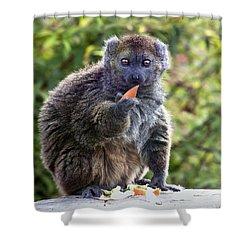 Alaotran Gentle Lemur Shower Curtain