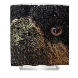 Shower Curtain featuring the photograph Alaskan Bear by Jennifer Wheatley Wolf