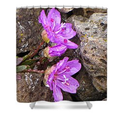 Alaskan Wildflower Shower Curtain by Julie Andel