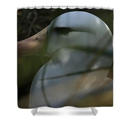 Shower Curtain featuring the photograph Albatross by Amanda Stadther