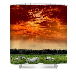 Shower Curtain featuring the photograph Alberta Canada Cattle Herd Hdr Sky Clouds Forest by Paul Fearn