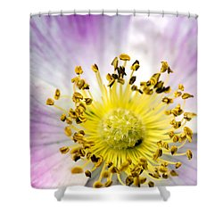 Alberta Wild Rose Shower Curtain by Dee Cresswell